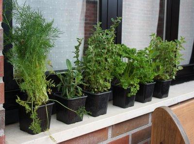 hierbas aromáticas en el balcón